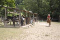 Caballos在Ainsa,阿拉贡附近的马大农场,比利牛斯山的,韦斯卡省,西班牙 免版税库存图片