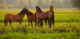 caballos Fotos de archivo libres de regalías