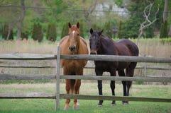 2 caballos Imagen de archivo libre de regalías