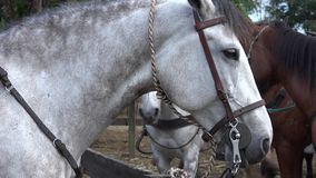 Caballos, animales del campo, equinos almacen de metraje de vídeo