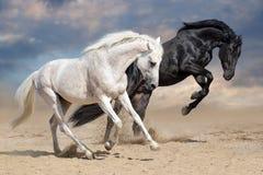 Caballos blancos y negros Foto de archivo libre de regalías