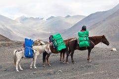 Caballos con la carga pesada Foto de archivo libre de regalías