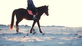 Caballos con los jinetes y el invierno en la puesta del sol, primer Caballo hermoso con un jinete en el invierno, cámara lenta sh almacen de metraje de vídeo
