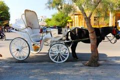 Caballos de carro en la isla de Aegina - Grecia Fotografía de archivo libre de regalías