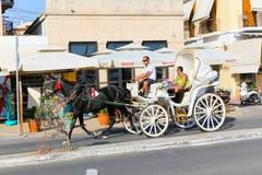 Caballos de carro en la isla de Aegina - Grecia Imagen de archivo