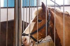 Caballos de diversas razas en la exposición de caballos imagen de archivo
