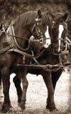 Caballos de guerra civil Imágenes de archivo libres de regalías