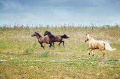 Caballos de Kazakhstan foto de archivo libre de regalías