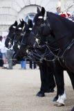 Caballos de la caballería británica del hogar Foto de archivo libre de regalías