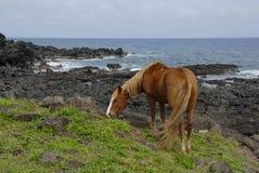 Caballos de la isla de pascua Fotografía de archivo libre de regalías