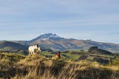 Caballos de la montaña Imágenes de archivo libres de regalías
