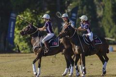 Caballos de los jugadores de la Polo-cruz Fotos de archivo