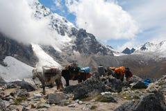 Caballos de paquete en canto de la montaña Fotos de archivo