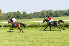 Caballos de raza en la pista de Partynice Fotografía de archivo libre de regalías