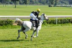 Caballos de raza en la pista de Partynice Fotografía de archivo