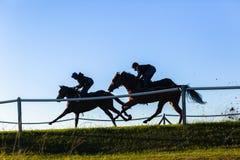 Caballos de raza que corren el azul Foto de archivo
