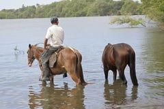 Caballos de riego del hombre en la isla de Ometepe Imágenes de archivo libres de regalías
