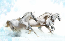 Caballos del invierno Imagenes de archivo