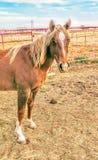 Caballos del rancho Imagen de archivo