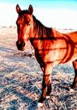 Caballos del rancho Fotografía de archivo libre de regalías