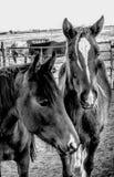 Caballos del rancho Imágenes de archivo libres de regalías