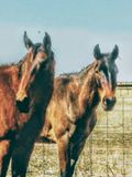 Caballos del rancho Imagen de archivo libre de regalías