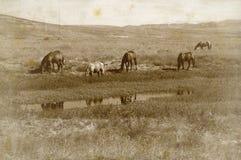 Caballos del rango imagenes de archivo