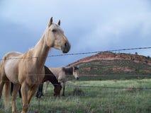 Caballos del rango de Colorado Foto de archivo libre de regalías