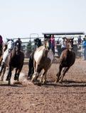 Caballos del rodeo Foto de archivo
