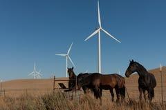 Caballos delante de los molinoes de viento Fotografía de archivo