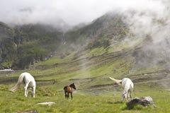 Caballos en campo de la montaña Imagen de archivo
