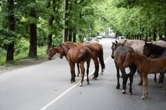 Caballos en el camino Imagenes de archivo