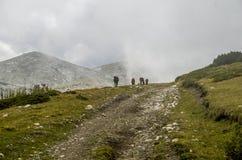 Caballos en el camino Imagen de archivo libre de regalías