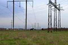 Caballos en el campo en el fondo de alambres El tema de la ecología y de la contaminación Imagenes de archivo