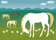 Caballos en el prado Foto de archivo libre de regalías