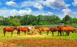 Caballos en el rancho fotos de archivo libres de regalías