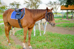 Caballos en el stable#2 Fotografía de archivo