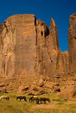 Caballos en el valle del monumento, Arizona Imágenes de archivo libres de regalías