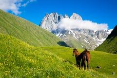 Caballos en el valle hermoso de la montaña Imagen de archivo libre de regalías