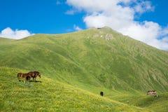 Caballos en el valle hermoso de la montaña Fotos de archivo libres de regalías