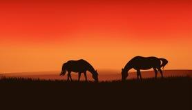 Caballos en el vector de la puesta del sol Foto de archivo libre de regalías