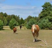 Caballos en granja Foto de archivo libre de regalías
