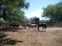 Caballos en la granja Fotos de archivo