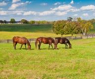 Caballos en la granja del caballo Fotografía de archivo libre de regalías