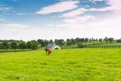 Caballos en la granja del caballo Paisaje del país Fotos de archivo
