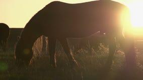 Caballos en la luz del sol