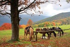 Caballos en la montaña Imagen de archivo libre de regalías