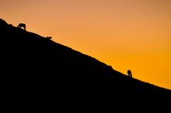 Caballos en la montaña en la puesta del sol de oro en Kirguistán Imagen de archivo