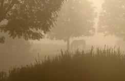 Caballos en la niebla Fotos de archivo