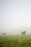 Caballos en la niebla Foto de archivo